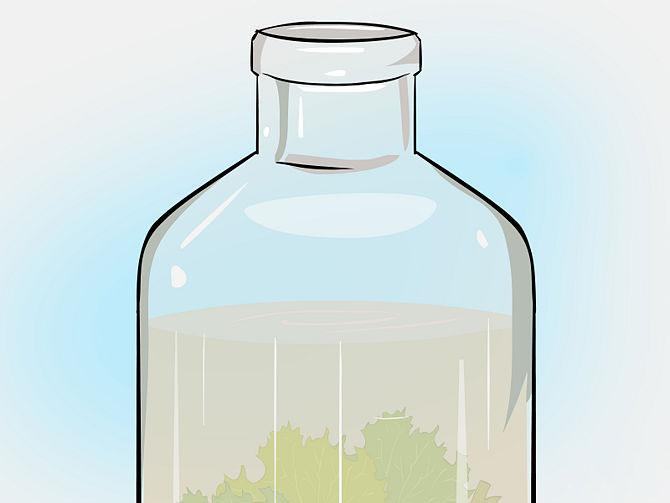Вода помутнеет от водорослей и бактерий