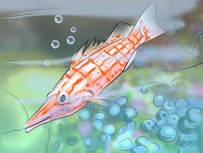 Поведение рыбы