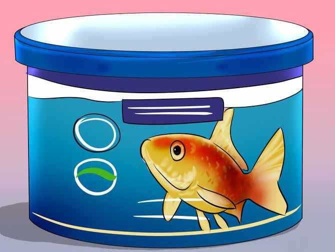 Рацион питания аквариумных рыбок