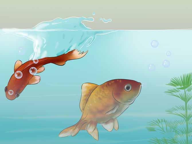 Размер рыбок