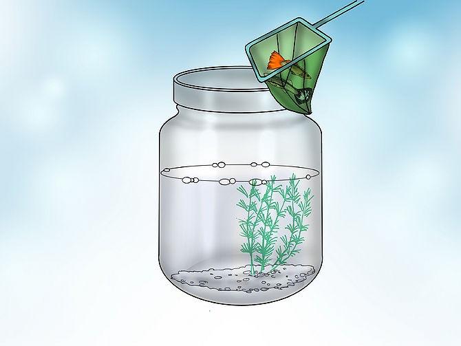 Маленькие рыбки для маленького аквариума