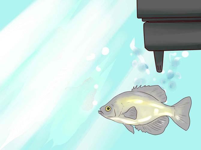 карась в домашнем аквариуме - оборудование