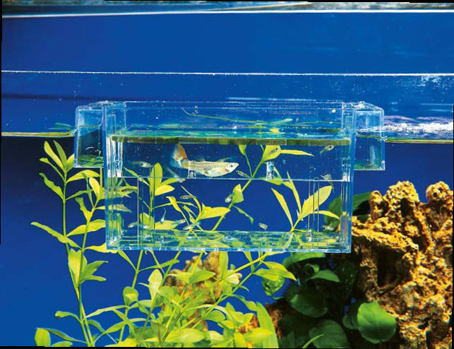 Инструкция по разведению рыбок в аквариуме