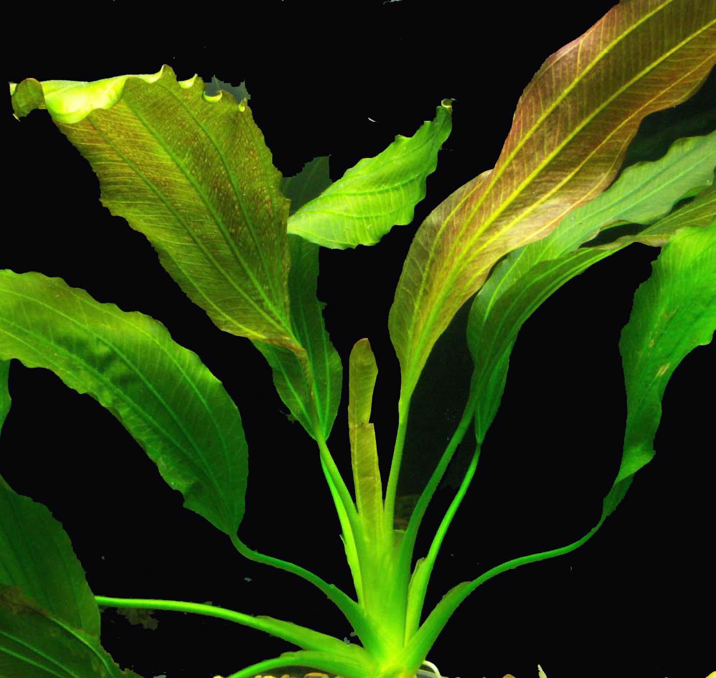 кредитный банк аквариумные растения фото с названиями и ценами моторолы сих пор