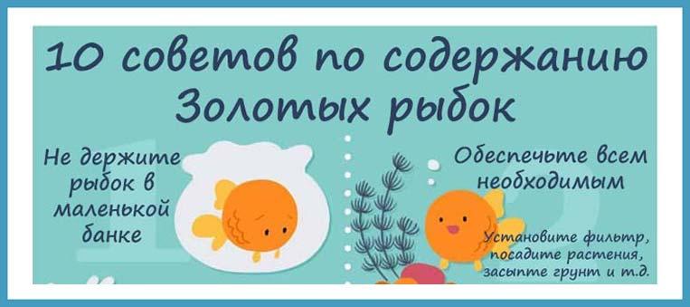 10 советов по содержанию Золотых рыбок