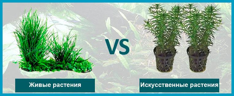 Какие растения выбрать в аквариум — живые или искусственные?