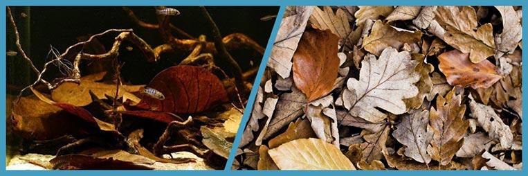 Листья каких деревьев можно использовать в аквариуме