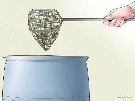Как вырастить личинок комаров для кормления рыб