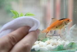 Как удалить маленькие царапины со стекла аквариума