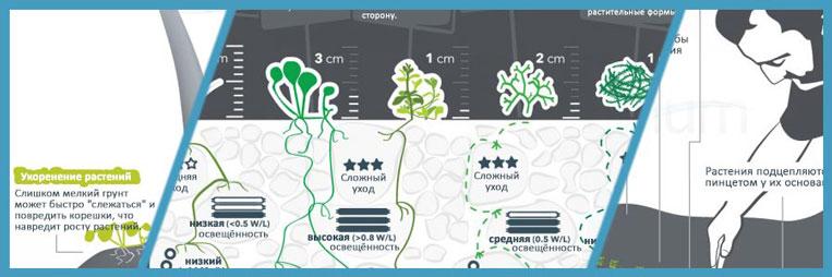 Инфографика «Руководство по посадке растений в аквариуме»