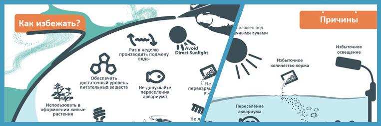 Инфографика - причины появления и способы борьбы с водорослями в аквариуме