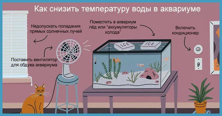 Как охладить аквариум летом
