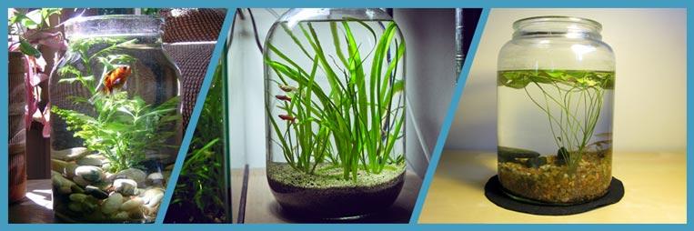Каких аквариумных рыбок можно держать в стеклянной банке