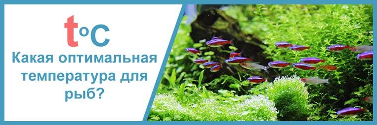 Какая температура воды должна быть в аквариуме
