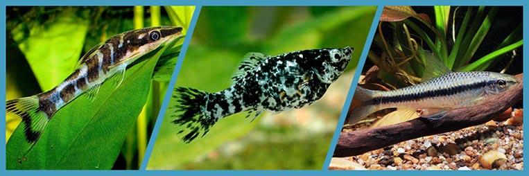 Какие аквариумные рыбки едят водоросли
